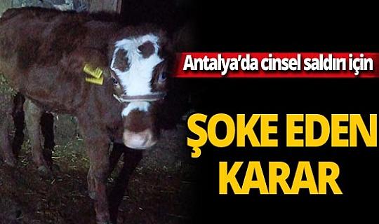 Antalya'da 2 aylık buzağıya cinsel saldırıda bulunan adam ceza almadı