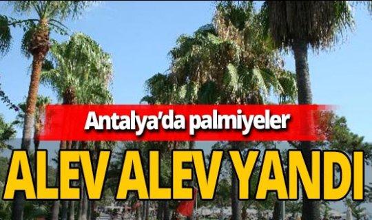 Antalya'da korkutan yangın! 50'ye yakın palmiye kül oldu
