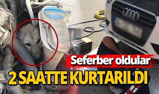 Antalya'da otomobil motoruna sıkışan sokak köpeği kurtarıldı