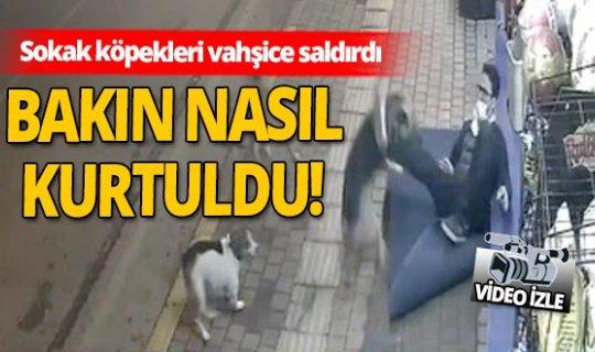 Antalya'da sokak köpekleri saldırdı! O anlar kameraya yansıdı...