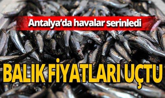 Antalya'daki hava koşulları balık fiyatlarını etkiledi!