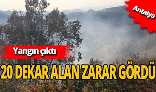 Antalya Gazipaşa'da bahçe yangını çıktı!