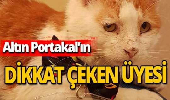 Antalya haber: Karşınızda Altın Portakal ekibinden 'Toros'