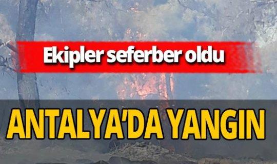 Antalya haber: Mezarlık yakınında korkutan yangın!