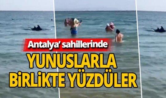 Antalya haber: Sahile kadar gelen yunuslar turistlerle birlikte yüzdü