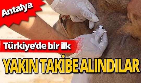 Antalya haber: Türkiye'de ilk kez Antalya'da yapıldı