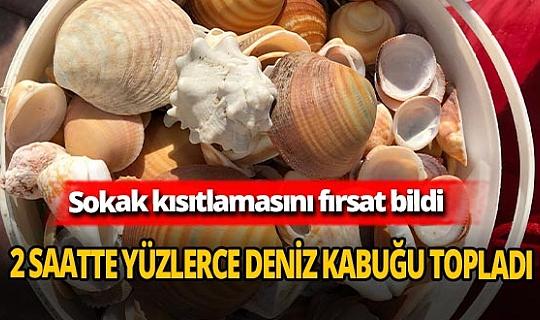 Antalya sahilleri koleksiyoncuların uğrak yeri oldu