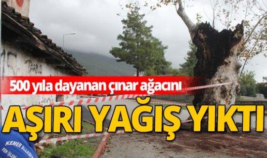 Aşırı yağışa 500 yıllık çınar ağacı da dayanamadı