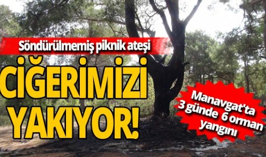 Asırlık çam ağacı yanmaktan son anda kurtarıldı