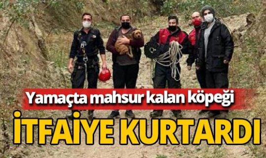 Aydın'da yamaçta mahsur kalan köpeği itfaiye kurtardı