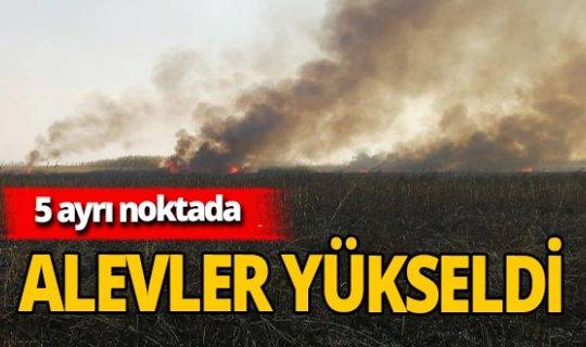Göksu Deltası'nda yangın çıktı!