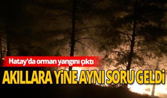Hatay'da yine orman yangını çıktı!