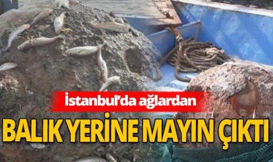 İstanbul'da balıkçıların ağına takıldı! Paniğe yol açtı