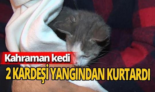 Kahraman kedi 2 kardeşi yangından kurtardı