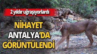 'Karakulak' Antalya'da görüntülendi