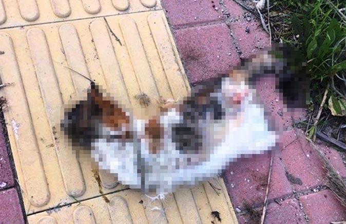 Bu ilk değil! Bir kedi daha bacakları kesilerek öldürüldü