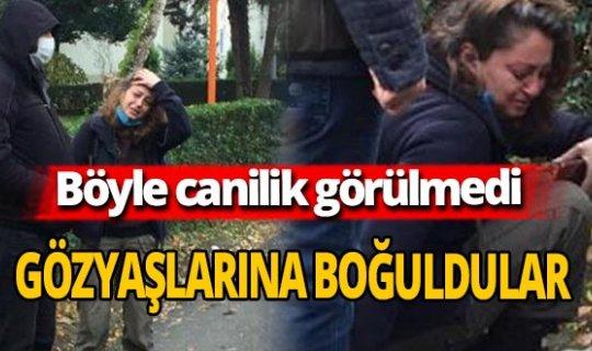 Kocaeli'nde 'Sokak köpekleri uyuşturucu iğneyle telef edildi' iddiası