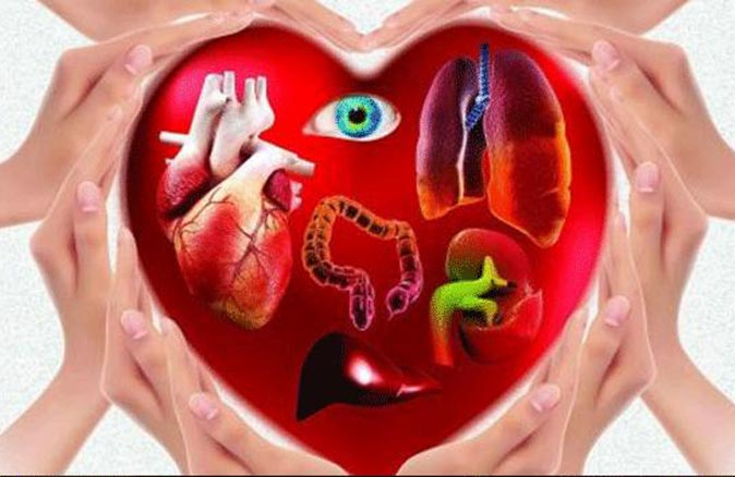 Korona virüs salgını organ naklini vurdu