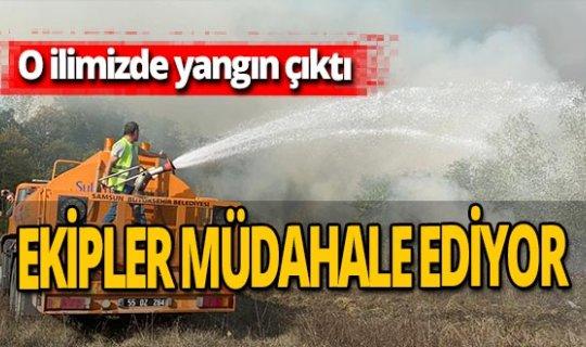 Samsun'da orman yangını çıktı!