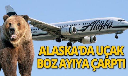 Son dakika! Uçak boz ayıya çarptı