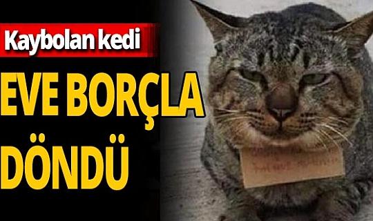 Tayland'da kaybolan kedi 'borçlu' şekilde sahibine döndü