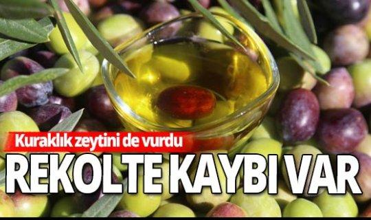Türk zeytinyağı, İtalyan markasıyla satılıyor