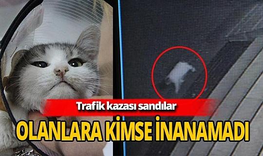 Diyarbakır'da hayvan vahşeti! Kedinin arka ayaklarını kestiler
