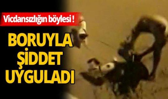 Yürekleri sızlatan görüntü! İzmir'de hayvana şiddet