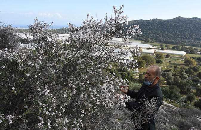 Azganlar kış ayında çiçek açtı