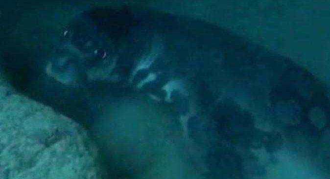 Antalya'daki Akdeniz foku bakın neden ölmüş!