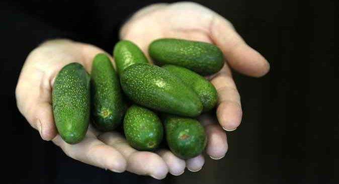 Sadece büyümemiş olduğu için daha pahalı: 'Baby' avokado