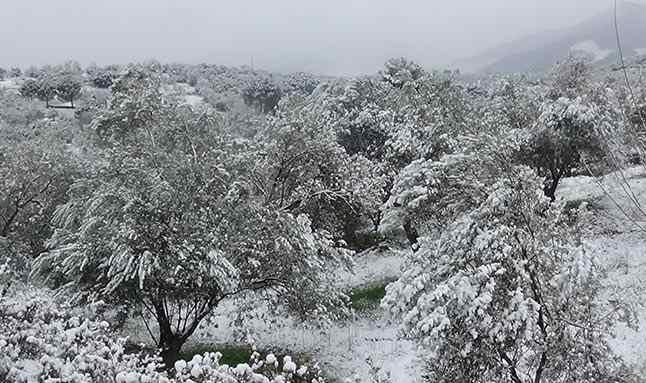 Yaklaşık 9 yıl aradan sonra şehir merkezinde ve sahil bölgelerinde kar yağışı alan Edremit beyaza büründü.