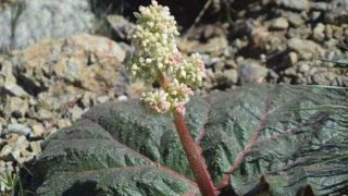 Bilim dünyası yeni bitki türü keşfetti
