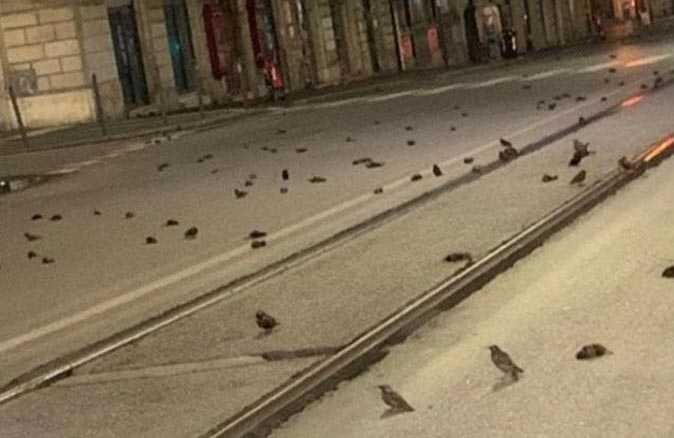 Havai fişekler nedeniyle yüzlerce kuş telef oldu