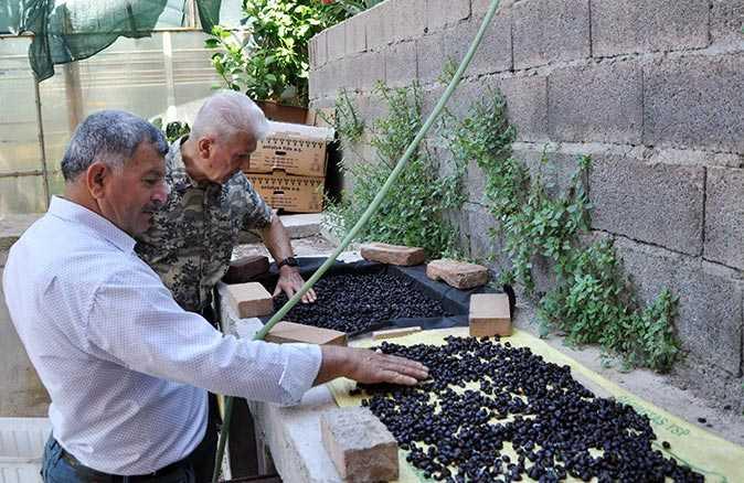 87 yıl sonra tekrar kahve üretimi için hazırlanılıyor