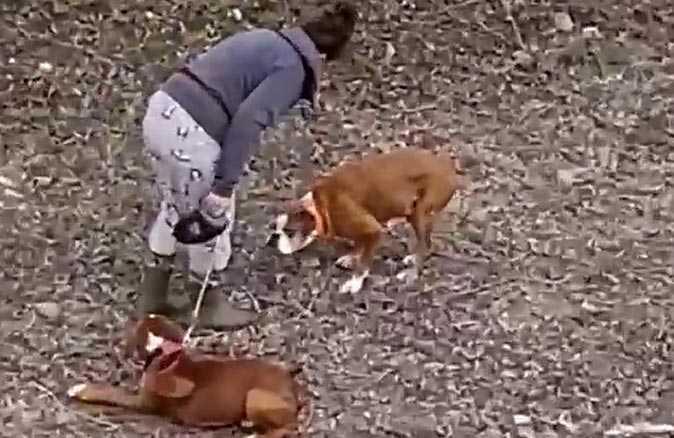 Sokak ortasında iki köpeğe sopalı eziyet