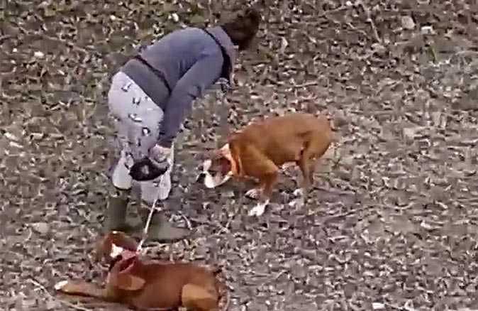 Köpeğe şiddet uygulayan kadın kendini savundu