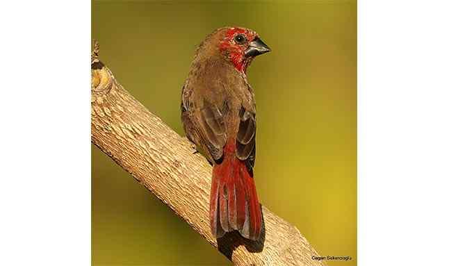 Prof. Dr. Çağan Şekercioğlu, 2020'de tüm dünyada en çok kuş türü gören kişi oldu.