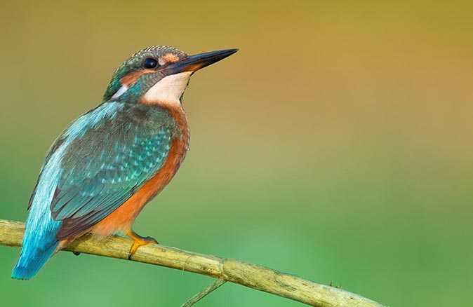 En fazla kuş türü Antalya'da gözlendi