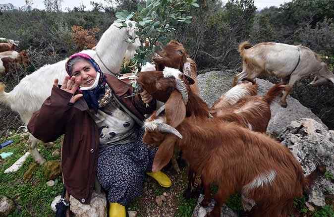 Lüks binaların arasında keçileriyle doğa sevgisini yaşatıyor : Menşure Teyze