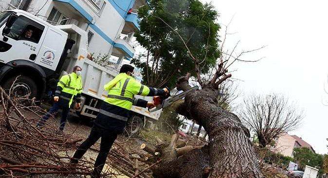 Fırtınada devrilen ağaca belediye müdahale etti