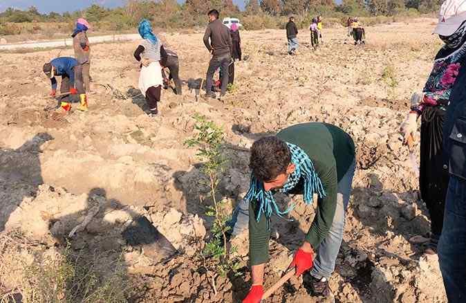 Antalya'da bir ilk! Sakız fidanı ormanları kuruluyor