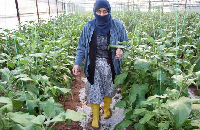 Aşırı yağış ve doludan sera çöktü, kadın çiftçi gözyaşlarını zor tuttu