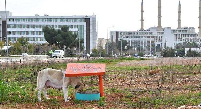 Konyaaltı Belediyesi üniversitedeki sokak hayvanlarını unutmadı