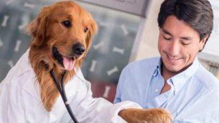 Köpeğiniz koronavirüs testinizi yapabilir