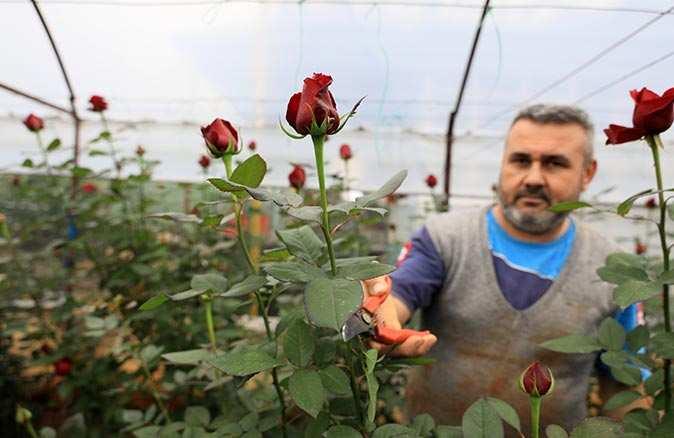 Çiçekçilerde sevgililer günü telaşı