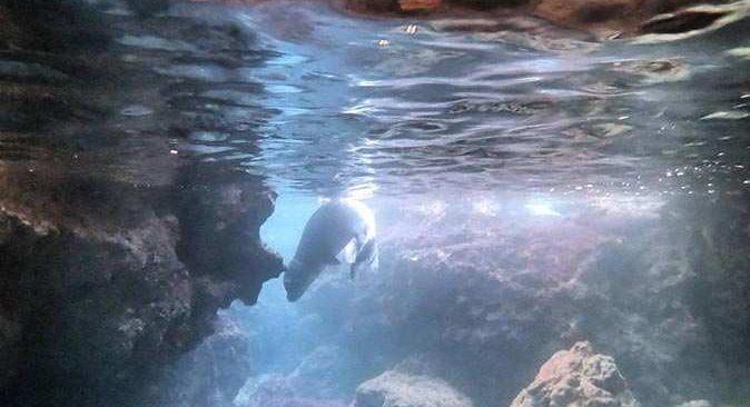 Deniz dibinde temizlik yaparken, nesli tükenen Akdeniz fokuyla karşılaştı
