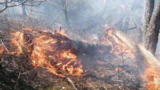 Manavgat'ta orman yangını! Kontrol altına alınmaya çalışılıyor