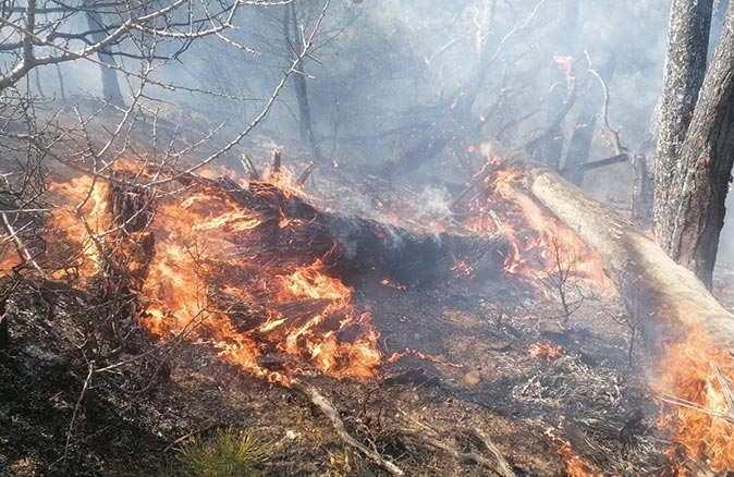 Manavgat'ta orman yangını! 4 hektarlık alan zarar gördü
