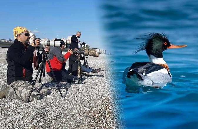 Göçmen kuş Antalya'da mola verdi, herkes sahile akın etti